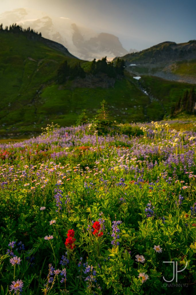 Peak wildflower season at Paradise